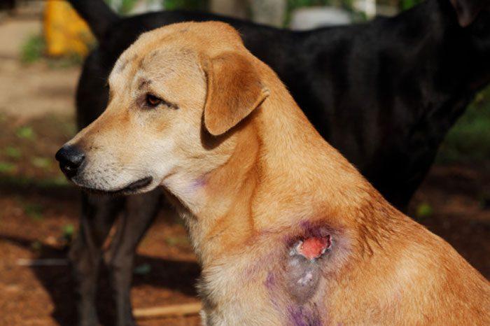 5 نکته مهم در مدیریت زخم حیوانات خانگی