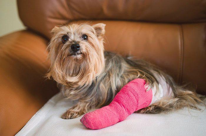 درمان انواع زخم ها در حیوانات خانگی